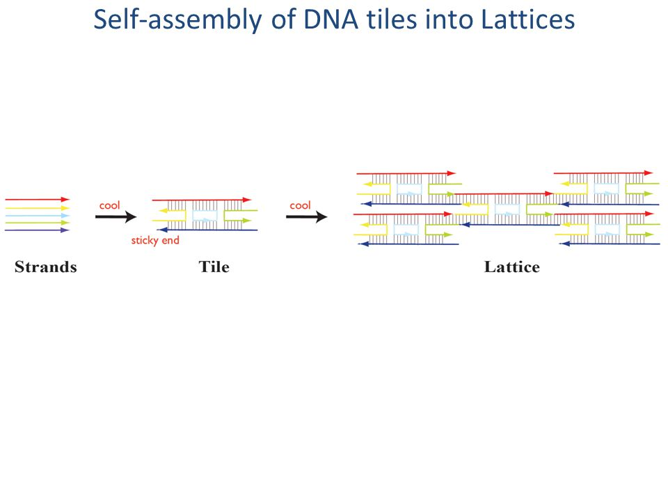Self-assembly of DNA tiles into Lattices