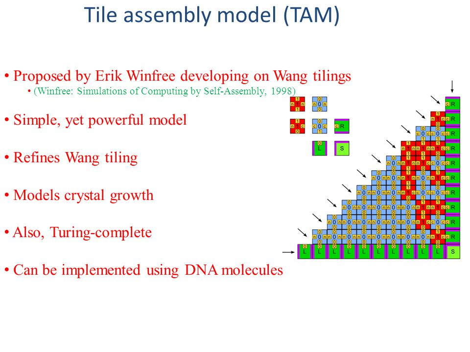 Tile assembly model (TAM) Proposed by Erik Winfree developing on Wang tilings (Winfree: Simulations of Computing by Self-Assembly, 1998) Simple, yet powerful model Refines Wang tiling Models crystal growth Also, Turing-complete Can be implemented using DNA molecules