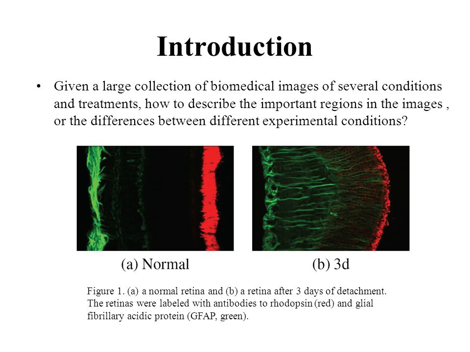 Introduction Given a large collection of biomedical images of several conditions and treatments, how to describe the important regions in the images, or the differences between different experimental conditions.