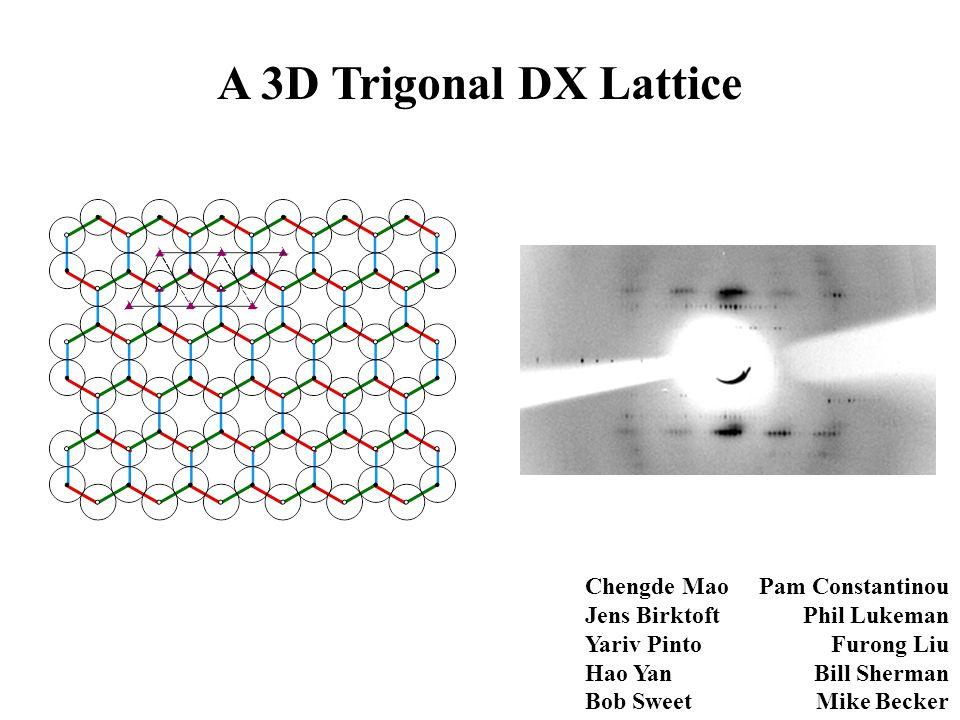 A 3D Trigonal DX Lattice Chengde Mao Jens Birktoft Yariv Pinto Hao Yan Bob Sweet Pam Constantinou Phil Lukeman Furong Liu Bill Sherman Mike Becker