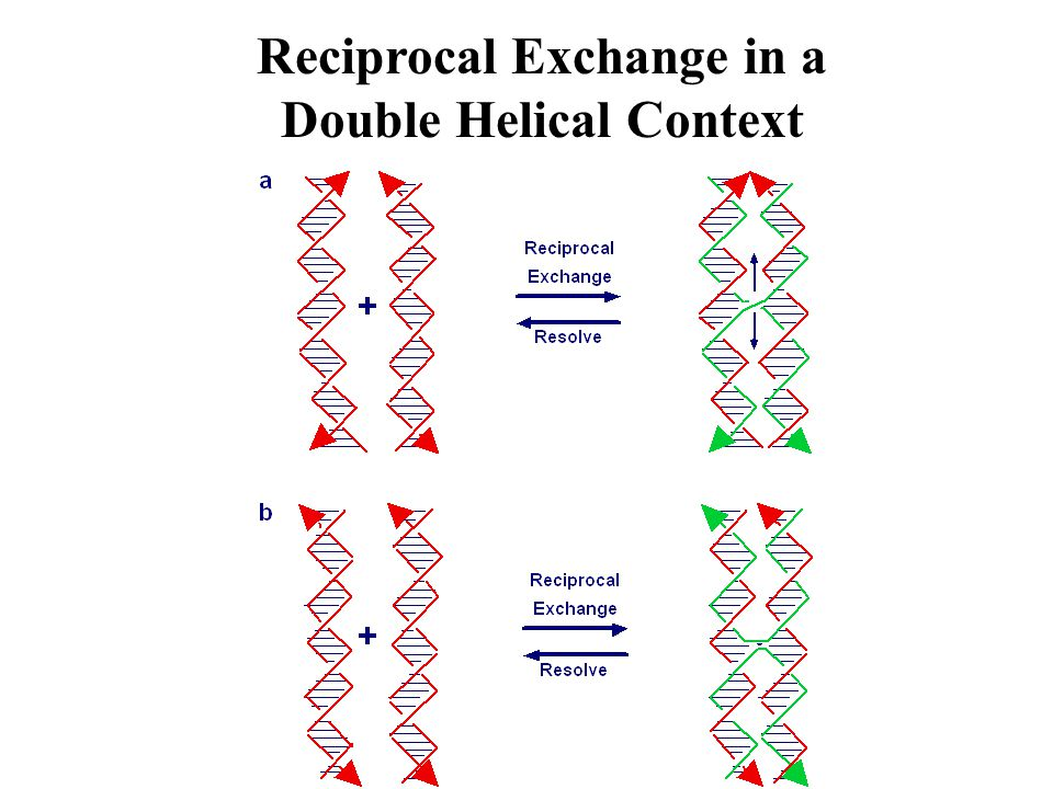 Cassette to Insert the PX-JX 2 Device ~Perpendicularly Into a TX Lattice PX Conformation JX 2 Conformation