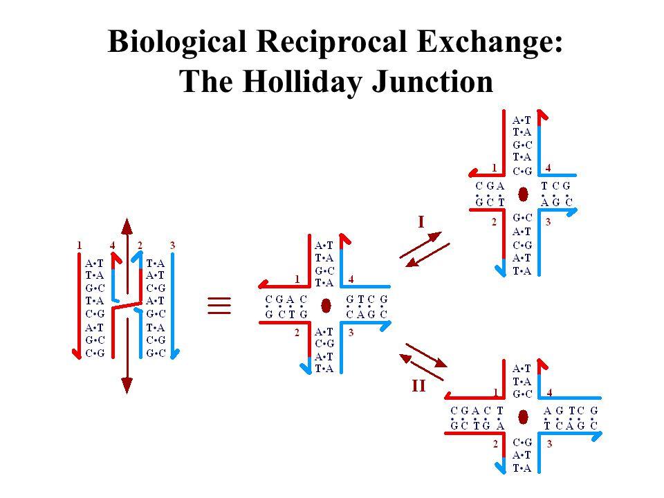 Paranemic Cohesion with the PX Motif Left: Ubiquitous Reciprocal Exchange Creates a PX Molecule.