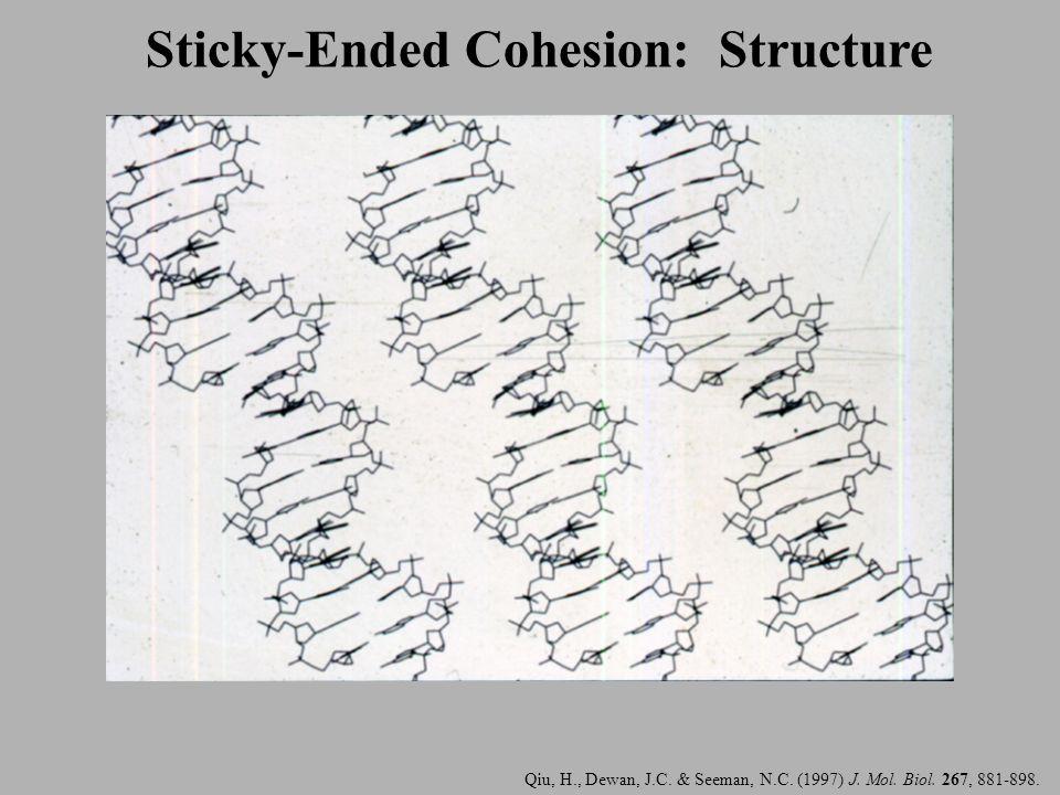 Qiu, H., Dewan, J.C. & Seeman, N.C. (1997) J. Mol. Biol. 267, 881-898. Sticky-Ended Cohesion: Structure