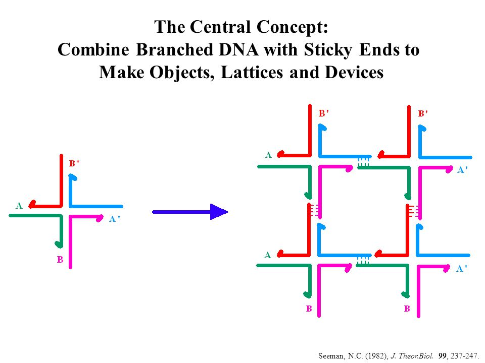 A Cumulative XOR Calculation: Tiles Mao, C., LaBean, T.H., Reif, J.H.