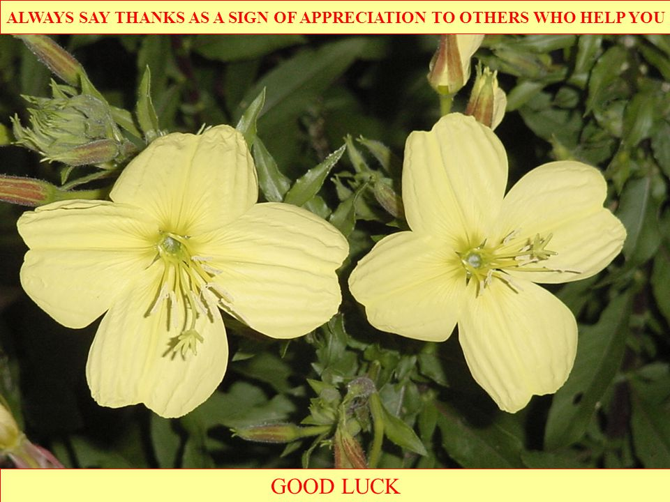 GOOD LUCK ALWAYS SAY THANKS AS A SIGN OF APPRECIATION TO OTHERS WHO HELP YOU