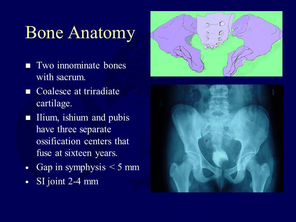 Bone Anatomy Two innominate bones with sacrum.Coalesce at triradiate cartilage.