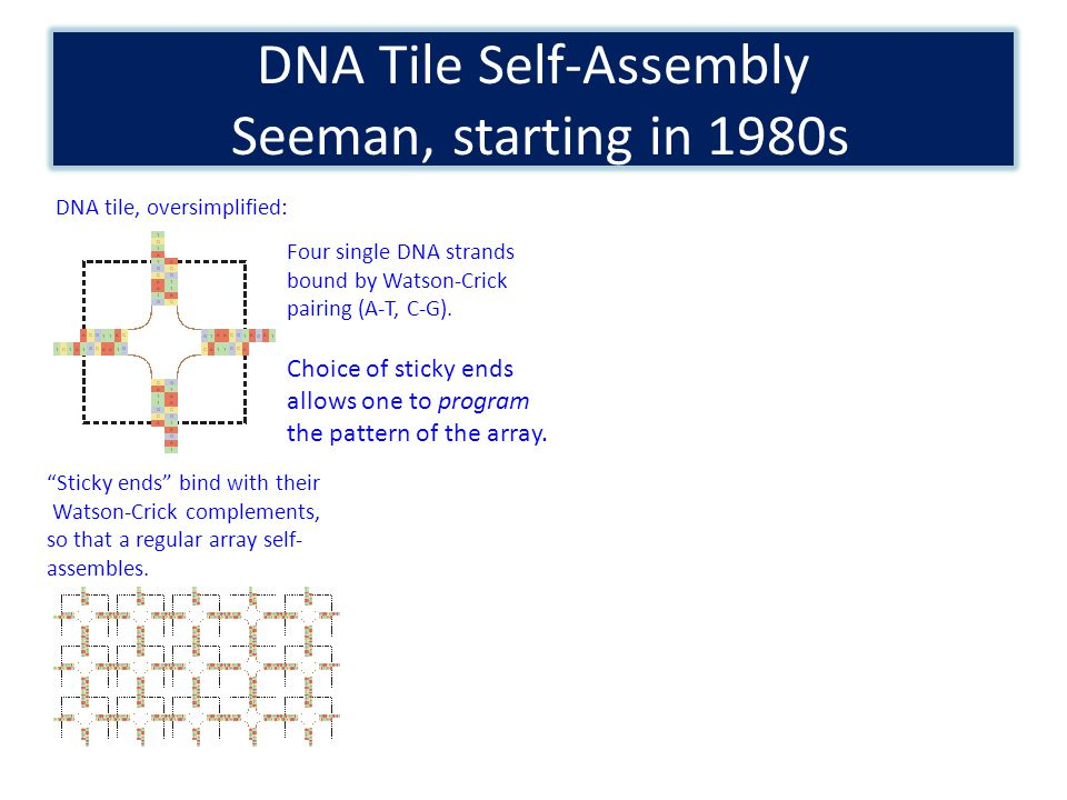 DNA Tile Self-Assembly Seeman, starting in 1980s DNA tile, oversimplified: Four single DNA strands bound by Watson-Crick pairing (A-T, C-G). Sticky en