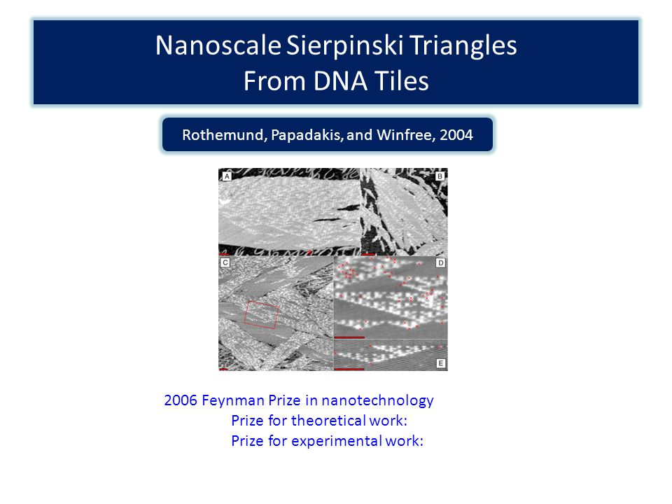 Nanoscale Sierpinski Triangles From DNA Tiles Rothemund, Papadakis, and Winfree, 2004 2006 Feynman Prize in nanotechnology Prize for theoretical work: Prize for experimental work:
