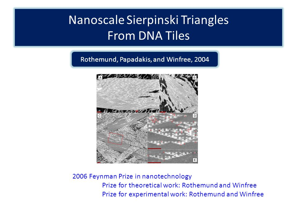 Nanoscale Sierpinski Triangles From DNA Tiles Rothemund, Papadakis, and Winfree, 2004 2006 Feynman Prize in nanotechnology Prize for theoretical work: Rothemund and Winfree Prize for experimental work: Rothemund and Winfree