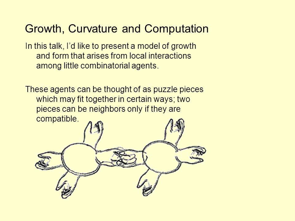 Growth, Curvature and Computation In this talk, Id like to present a model of growth and form that arises from local interactions among little combinatorial agents.