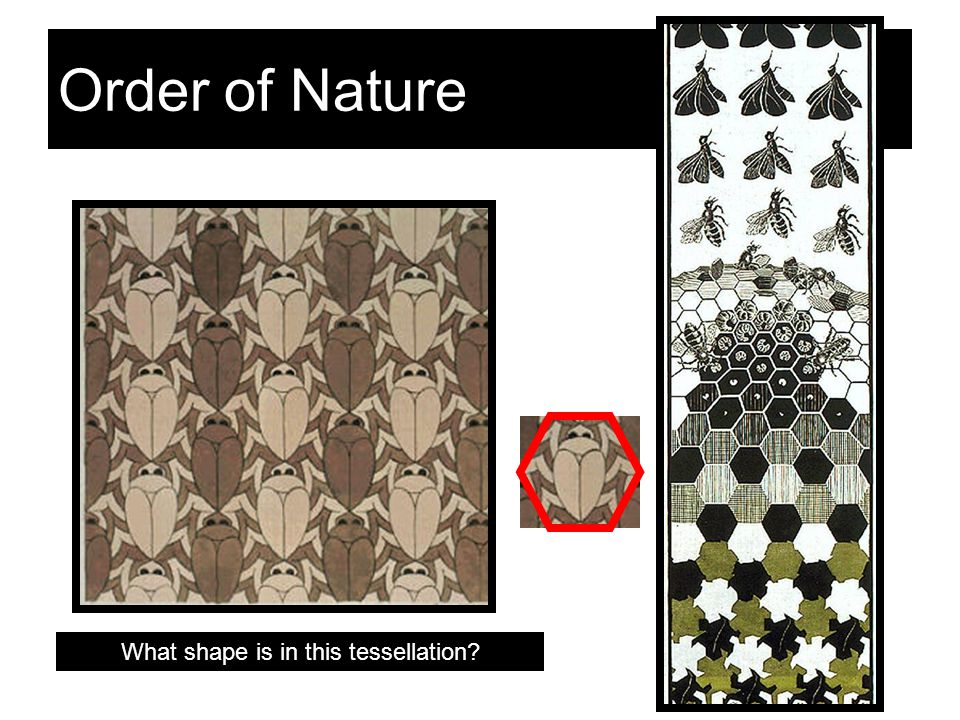 Eschers Inspiration Twenty of his tessellation prints include insect shapes.