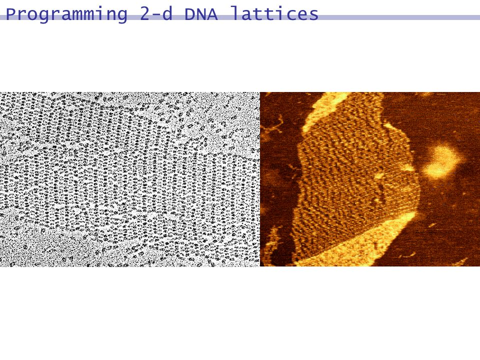 Programming 2-d DNA lattices