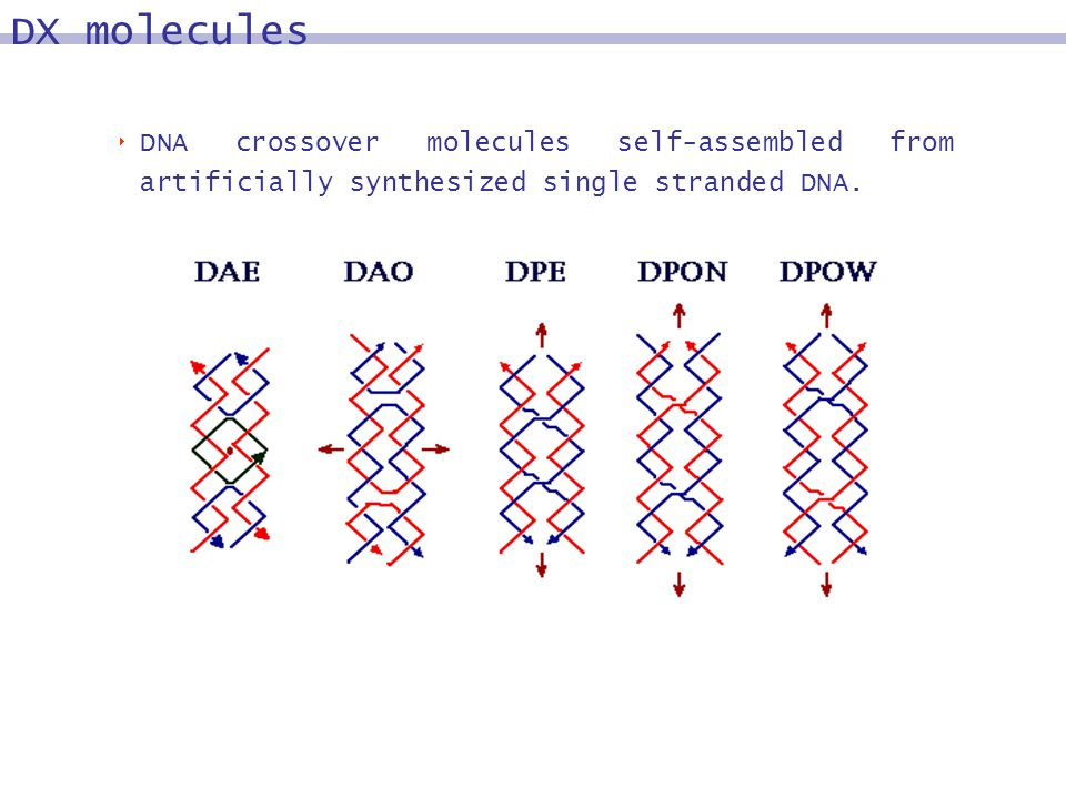 DNA crossover molecules self-assembled from artificially synthesized single stranded DNA.