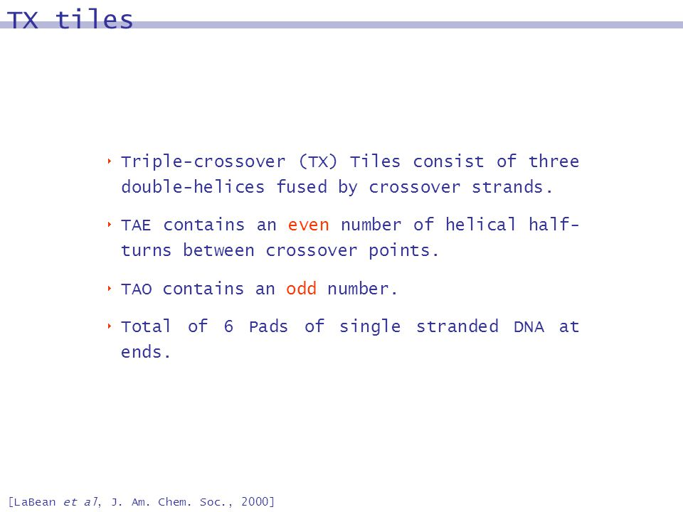 TX tiles [LaBean et al, J. Am. Chem. Soc., 2000] Triple-crossover (TX) Tiles consist of three double-helices fused by crossover strands. TAE contains