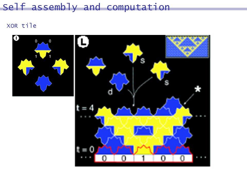 XOR tile Self assembly and computation