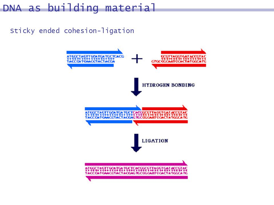 Sticky ended cohesion-ligation DNA as building material