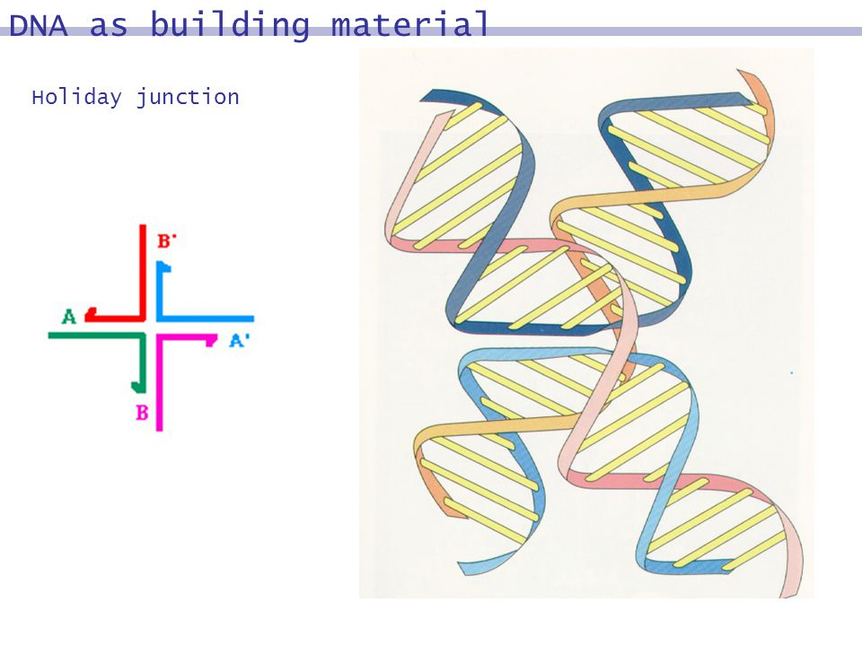 DNA as building material Holiday junction