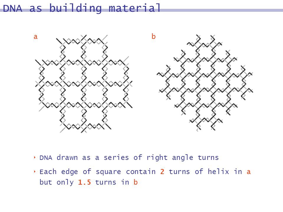 DNA drawn as a series of right angle turns Each edge of square contain 2 turns of helix in a but only 1.5 turns in b DNA as building material ba