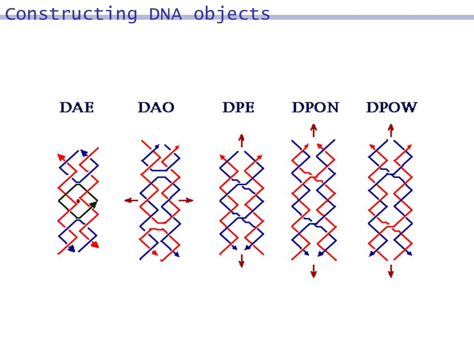 Constructing DNA objects