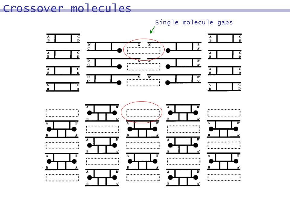 Single molecule gaps Crossover molecules