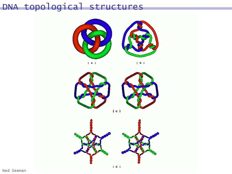 Ned Seeman DNA topological structures