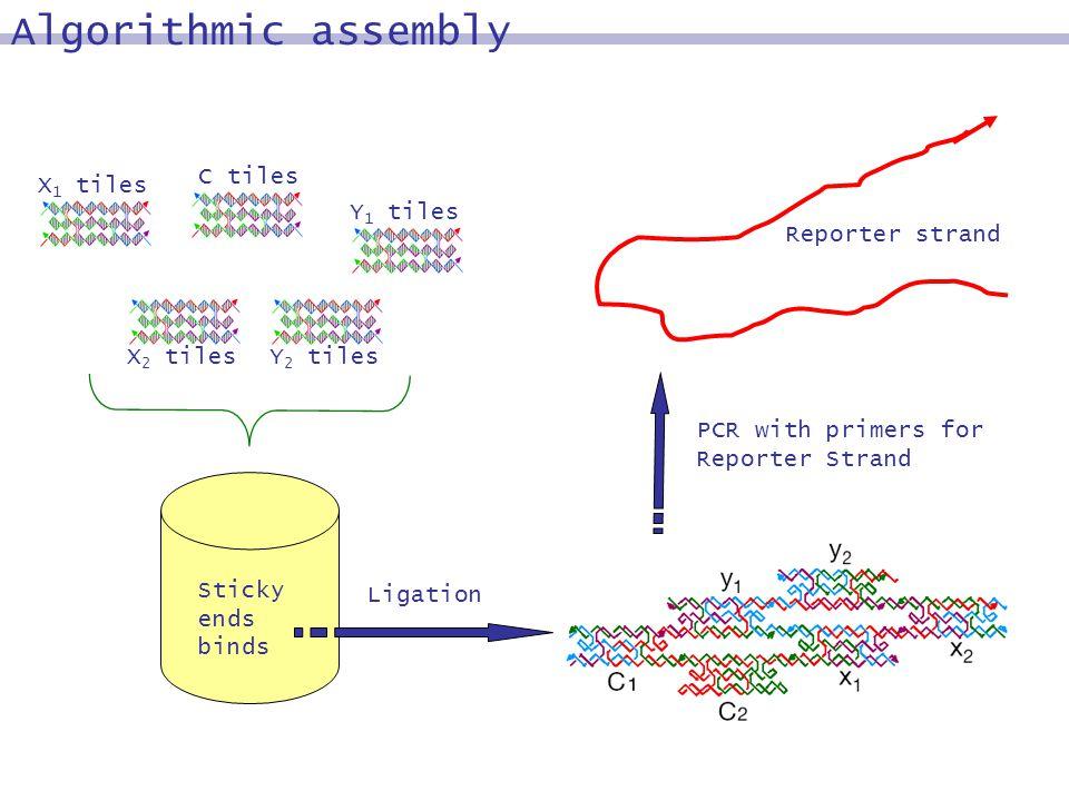 X 1 tiles Y 1 tiles Y 2 tiles C tiles X 2 tiles Sticky ends binds Reporter strand Ligation PCR with primers for Reporter Strand Algorithmic assembly