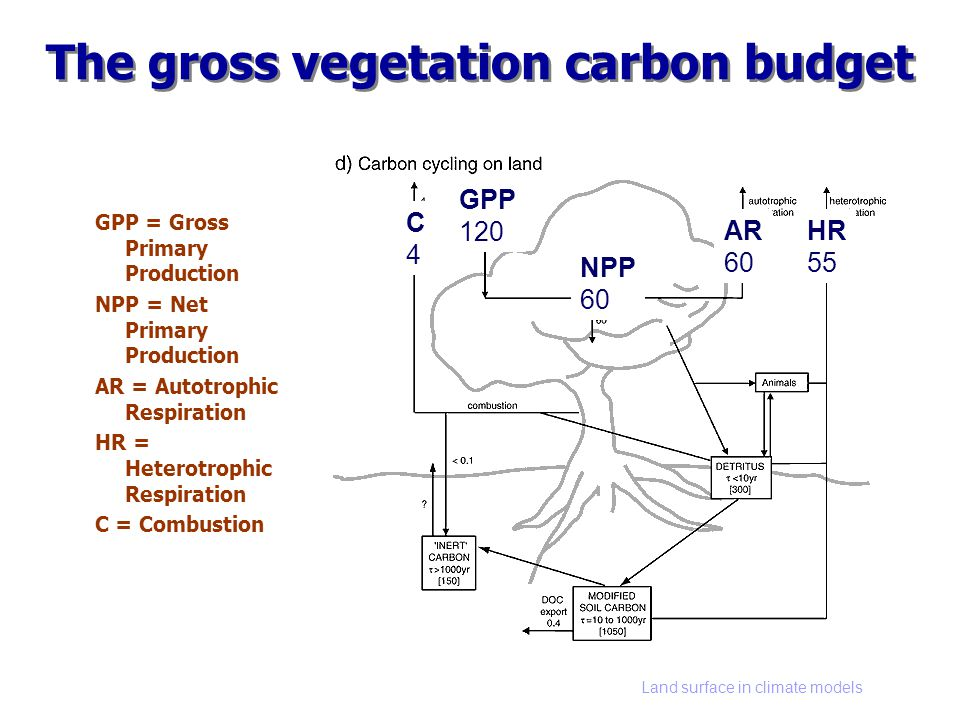 Land surface in climate models The gross vegetation carbon budget GPP = Gross Primary Production NPP = Net Primary Production AR = Autotrophic Respiration HR = Heterotrophic Respiration C = Combustion GPP 120 AR 60 HR 55 NPP 60 C4C4