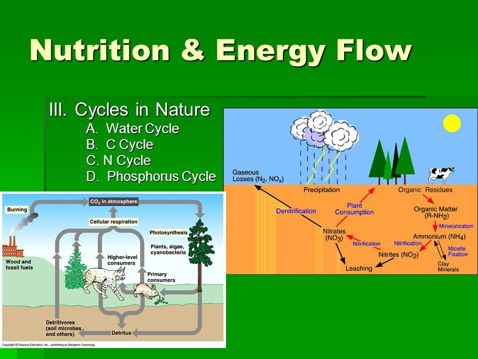 Nutrition & Energy Flow III. Cycles in Nature A. Water Cycle B. C Cycle C. N Cycle D. Phosphorus Cycle
