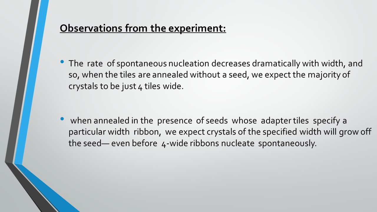 Observations from the experiment: The rate of spontaneous nucleation decreases dramatically with width, and so, when the tiles are annealed without a seed, we expect the majority of crystals to be just 4 tiles wide.