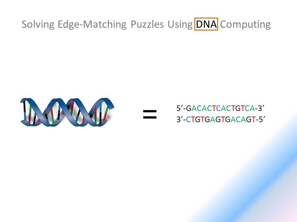 Solving Edge-Matching Puzzles Using DNA Computing 5-GACACTCACTGTCA-3 3-CTGTGAGTGACAGT-5 =