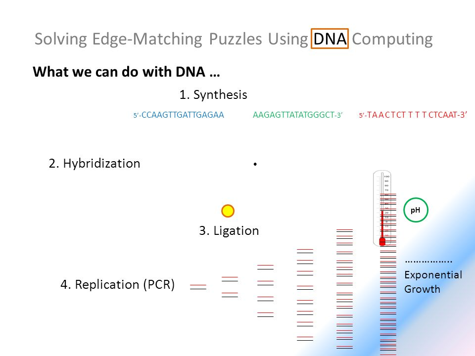 5- CCAAGTTGATTGAGAA Solving Edge-Matching Puzzles Using DNA Computing 5- TAACTCTTTTCTCAAT-3 1. Synthesis What we can do with DNA … 2. Hybridization pH
