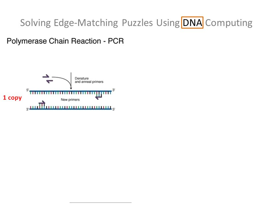 Solving Edge-Matching Puzzles Using DNA Computing 1 copy 2 copies 4 copies 8 copies Sd Jj