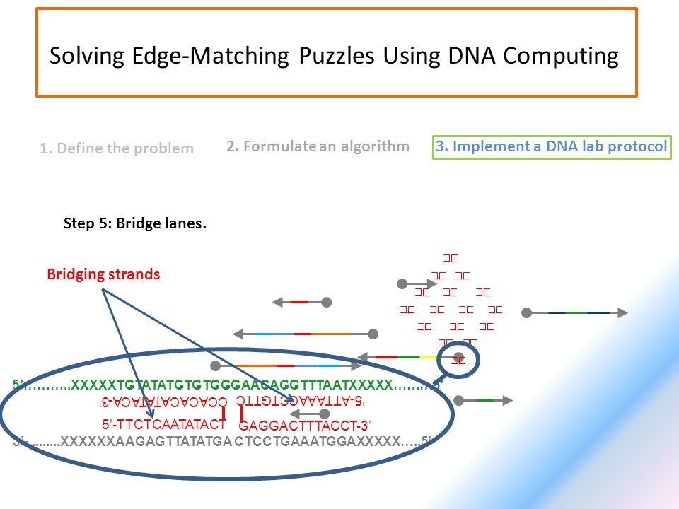 2. Formulate an algorithm3. Implement a DNA lab protocol 1. Define the problem Solving Edge-Matching Puzzles Using DNA Computing Step 5: Bridge lanes.