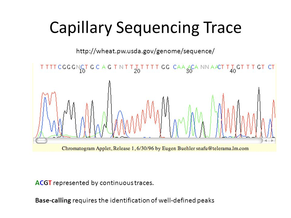 Problems with Variant Calling Variant Calling is difficult because – a diploid genome will have two haplotypes present, which can differ significantly, eg due to polymorphic indels should be easier with haploid or inbred genomes but even harder when looking at low-coverage pools of individuals (eg 1000 genomes) – Coverage can vary depending on GC content problem is sporadic – Optical duplicates may give the impression there is more support for a variant often all reads with the same start and end points are thinned to a single representative, but this can cause problems if the coverage is very high – read misalignments can produce false positives repetitive reads can be mapped to the wrong place indels near the ends of reads can cause local read misalignments, where mismatches (SNPs) are favoured over indels – very divergent sequence is hard to align may fail to give any mapping signal and will look like a deletion problem addressed by local indel realignment (GATK)