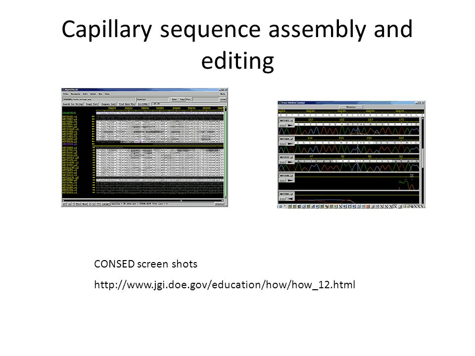 Other Applications RNA-Seq – gene expression Chip-Seq – DNA-protein binding sites – Histone marks – Nucleosome positioning – DNAse hypersensitive sites Methylation – bisulphite sequencing Mutation detection – from mutagenesis experiments – from human trios Multiplex Pooling – random genotyping from low coverage read data