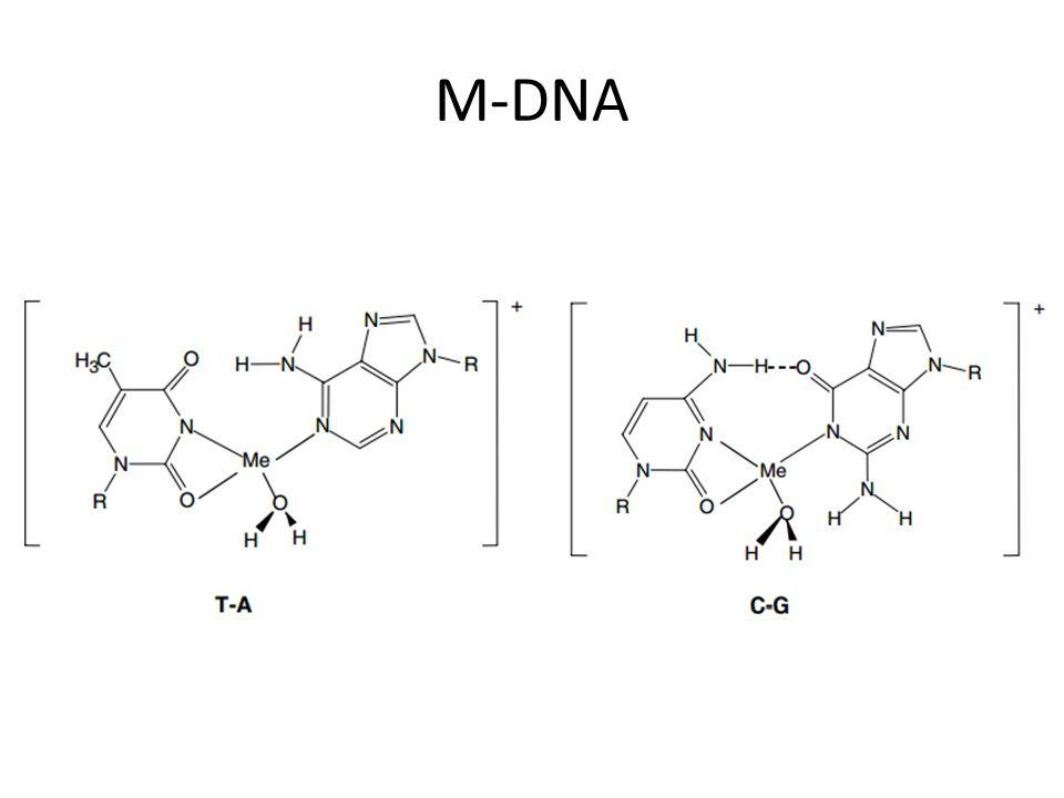 M-DNA