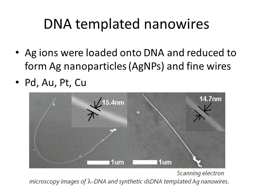 DNA templated nanowires Ag ions were loaded onto DNA and reduced to form Ag nanoparticles (AgNPs) and fine wires Pd, Au, Pt, Cu