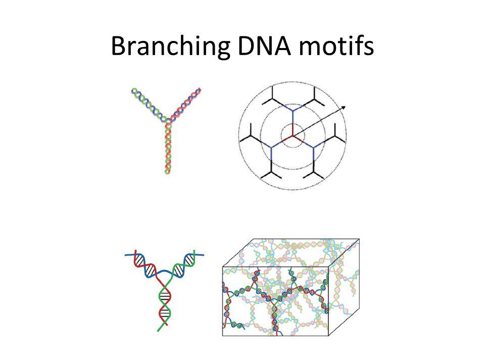 Branching DNA motifs