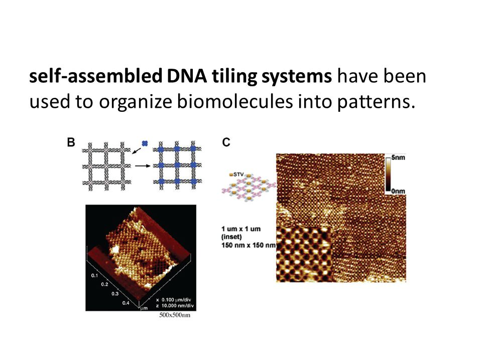 self-assembled DNA tiling systems have been used to organize biomolecules into patterns.