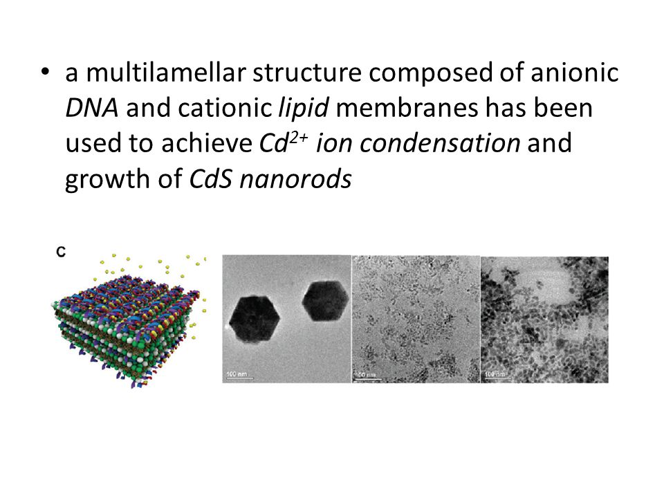 a multilamellar structure composed of anionic DNA and cationic lipid membranes has been used to achieve Cd 2+ ion condensation and growth of CdS nanorods