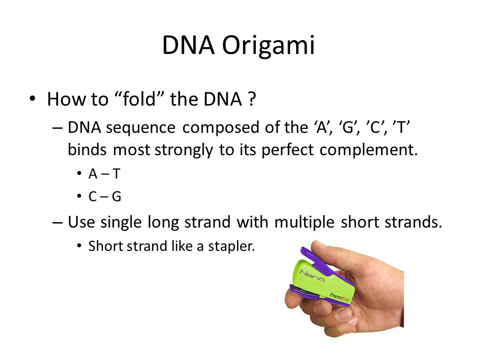 DNA Origami How to fold the DNA .