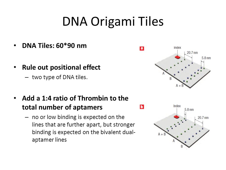 DNA Origami Tiles DNA Tiles: 60*90 nm Rule out positional effect – two type of DNA tiles.