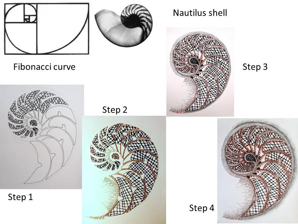 Fibonacci curve Nautilus shell Step 1 Step 2 Step 3 Step 4