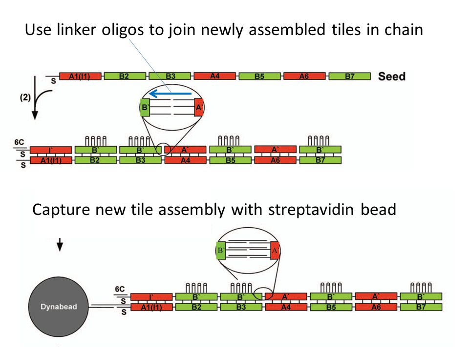 Use linker oligos to join newly assembled tiles in chain Capture new tile assembly with streptavidin bead