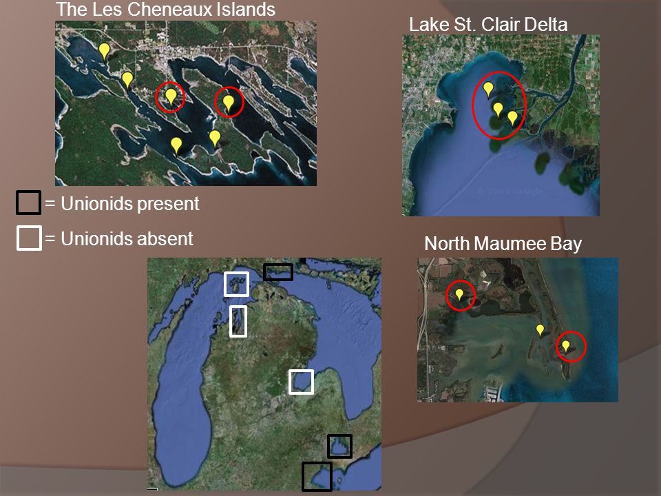North Maumee Bay Lake St. Clair Delta The Les Cheneaux Islands = Unionids present = Unionids absent