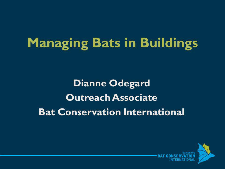 Buildings & other structures give bats what they need Crevices Stable, warm temperatures Microclimate options Predator protection Replacement roosts....