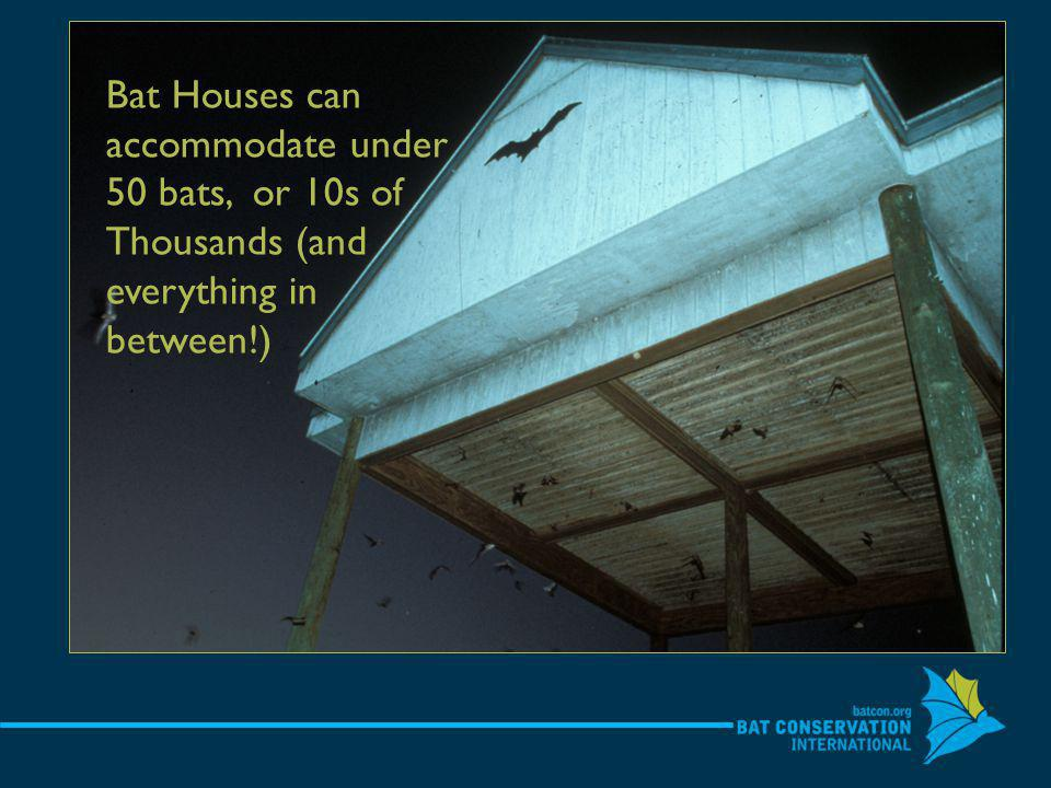Bat Houses can accommodate under 50 bats, or 10s of Thousands (and everything in between!)