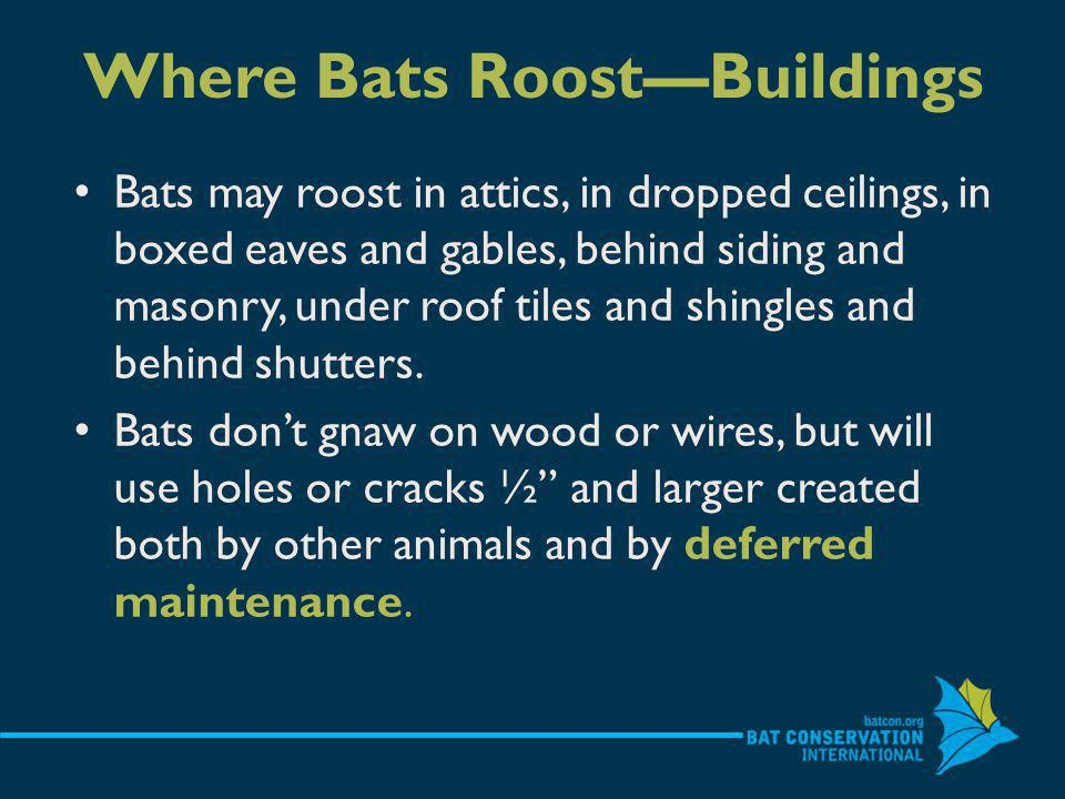 Ecological & Economic Bats eat crop and forest pests-many pest species are nocturnal so birds are not effective predators Scientists estimate the million bats lost to White Nose Syndrome in the eastern U.S.