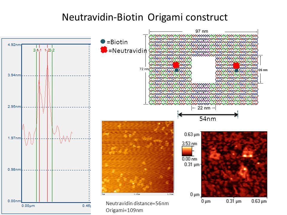 Neutravidin-Biotin Origami construct 54nm =Biotin =Neutravidin Neutravidin distance=56nm Origami=109nm