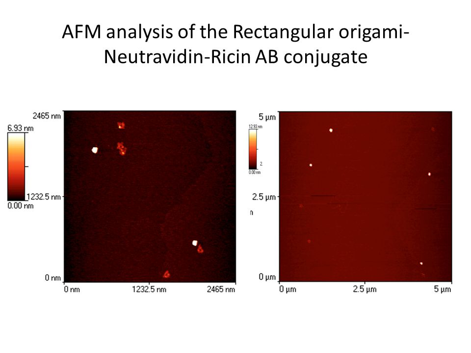 AFM analysis of the Rectangular origami- Neutravidin-Ricin AB conjugate